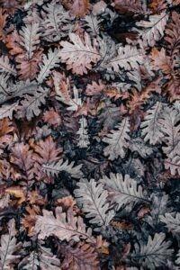 foglie aspiratori