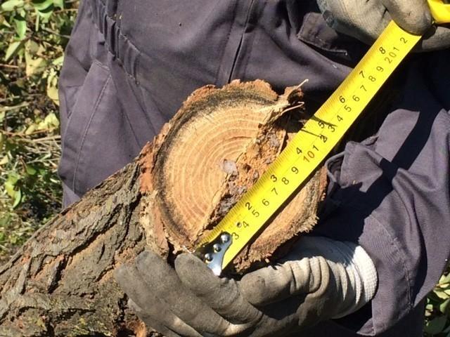 diametro legno cippatore Zakandra